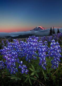 Pacific Coast Trail - Washington