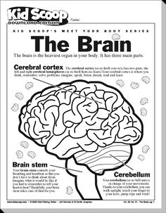 Brain Worksheets for Students | brain teasers for students