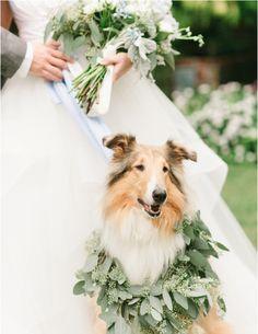 Leafy garland for a dog at your wedding - Bride - Bridal - Nupcial - Boda - Novia - Perro - Animal - Mariage - Matrimonio Garden Wedding, Dream Wedding, Wedding Day, Camp Wedding, Party Wedding, Wedding Things, Wedding Bride, Summer Wedding, Wedding Ceremony