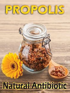 Propolis: A Natural Antibiotic #L4L #FF #tagforlikes #vitaminD