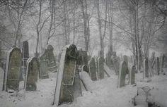 Sad, old, snowy boneyard