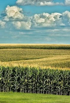 Country Living ~ corn fields of gold Country Farm, Country Life, Country Living, Country Roads, Fields Of Gold, Field Of Dreams, Country Scenes, Felder, Farm Life
