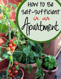 How to Be Self Sufficient in an Apartment- If your heart longs for rural areas, but you are stuck in the city, here are some simple ways to be more self sufficient in an apartment.