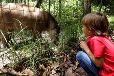 #zoo #fourmilier #Guyane #tournage #Gulli #ArthurAutourDuMonde