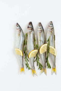 saltwater fish smelt marinated with rosemary and lemon on a white