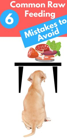 6 Common Raw Feeding Mistakes to Avoid Use these tips & rules to create your homemade Healthy & Natural Dog Food Dog Nutrition, Natural Dog Food, Dog Diet, Raw Food Diet, Dog Care Tips, Raw Food Recipes, Food Tips, Diet Tips, Dog Hacks