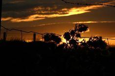 Sunset near Torness (Alex Adam)