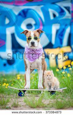 Funny Animals Summer Cat Stockfoto's, afbeeldingen & plaatjes   Shutterstock