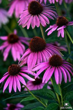 Late Summer Farmers Garden by Jim Crotty 10.jpg by jimcrotty.com, via Flickr