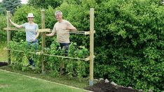 Himbeerspalier bauen (Diy Garden Vegetable) #organicgardening