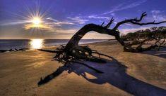 Driftwood Beach, Georgia, Estados Unidos Saca fotos de las magníficas vistas al océano y las maderas a la deriva
