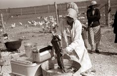 This picture was taken in 1939 near El Indio, Texas. It shows a woman washing clothes in a wash tub. Above the wash tub is a clothes wringer, which was operated by crank, and was used to remove excess water from the clothes prior to putting on a clothes line.