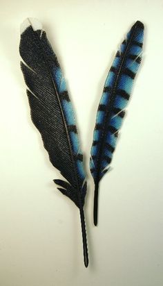 Blue Jay Feathers, kiln formed glass by Michael DuPille