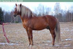 Finnish horse<3