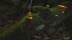 Un bosque 'mágico' gracias a la bioluminiscencia