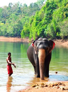 Elephant Rehabilitation Centre at Kottur, near Kappukadu. Go there before 9am to see how elephants are taken to the lake for a wash, and you might even be able to participate in the washing