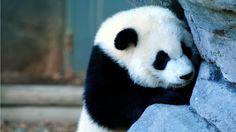 Panda Velká - Fotoalbum