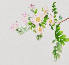 #야생화자수 #해당화 #꿈소 #꿈을짓는바느질공작소 #자수 #자수타그램 #embroidery #handembroidery #embroideryart #threadpainting #needlepainting #floralembroidery #stitchart #wildflowers #rugosarose #sweetbrier #handmade