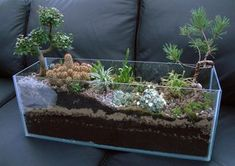 These glassy mini-gardens have long been fixtures in the home decor world, but in the past few years, their wider popularity has skyrocketed.