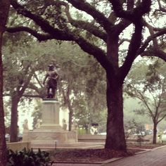 Foggy morning in Chippewa Square, Savannah. (This is where Forrest Gump sat on the bench and told his life story)