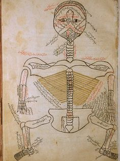 Persian Anatomical Illustrations, ca. 1390 from Mansur's Anatomy, the Tashrīḥi Manṣūri تشريح بدن انسان  Tashrīḥ-i badan-i insān  The Anatomy of the Human Body Composed by  منصور ابن محمد ابن احمد ابن يوسف ابن الياس   Manṣūr ibn Muḥammad ibn Aḥmad ibn Yūsuf Ibn Ilyās Manṣūr Ibn Ilyās was a late 14th century Persian physician from Shiraz, in Timurid Persia.   Read a bio and description by Emilie Savage-Smith, University of Oxford …