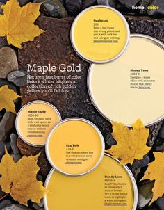 Maple Gold Paint Colors from Better Homes & Gardens. 328: Sunbeam by Benjamin Moore 360C-3: Honey Tone by Behr 3004-3C: Maple Taffy by Valspar A14-5: Egg Yolk by Olympic BHG614: Dandy Lion by bhg live better Image via