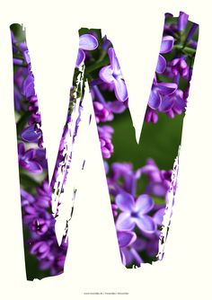 Lilac W letter