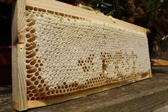 How to read bee hive frames