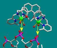 """Der neue kupferhaltige Wirkstoff (oben) """"klinkt"""" sich passgenau in das DNA-Molekül (unten) einer Krebszelle ein und beendet ihr Wachstum. Die Folge: Die Krebszelle stirbt. Foto: Universität Bielefeld"""