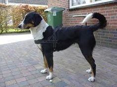blinde gelijde hond