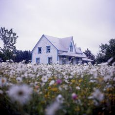 Bucket List: Have a photo shoot at an old farmhouse & field of flowers <3