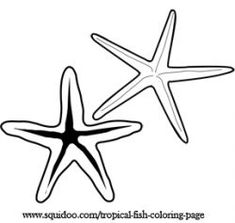 1000 images about printable tropical fish on pinterest for Sea star coloring page