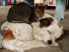Cat / puppy friends