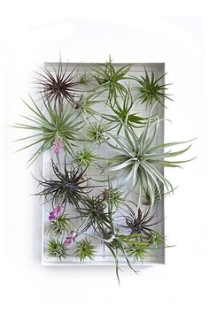 AirplantFrame (rectangle)