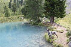Wandern mit Hund zum Berglisee im Paznaun
