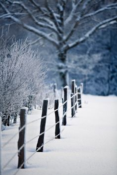I Love Winter, Winter Colors, Winter Snow, Snow Pictures, Pretty Pictures, Country Fences, Winter Wonderland Christmas, Scenery Photography, Winter Scenery