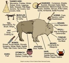 visual of how Native Americans used all the parts of a buffalo.Awesome visual of how Native Americans used all the parts of a buffalo. The Meaning of Native American Horse Markings Plains Bison vs Wood Bison Medicine Wheels & Shamanic Cosmology Native American Wisdom, Native American Tribes, Native American History, American Indians, American Bison, American Symbols, American Women, American Quotes, Native American Longhouse