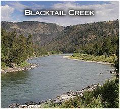 Hiking the Blacktail Creek Trail in Yellowstone