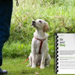 Teach your dog to Sit and Stay with behaviourist and dog trainer Karen Wild