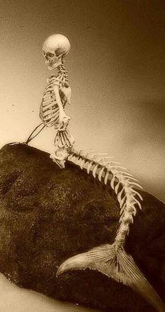 Mermaid skeleton #skulls