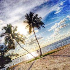 Island girl rule #1 never miss a sunset! #sunsetporn #palmtree #islandgirl #beachbabe #sunset #sandytoes #saltwater #wildchild #oceanlove #beachbum #island #islandlife #saltair #visitfl #sand #staysalty #oceanlove #naples #sanibelisland #captivaisland #sanibelstar #ftmyers #captiva #sanibel #islandgirlrules