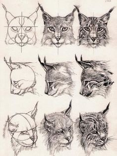 lynx head - middle right, maybe if it was looking up?