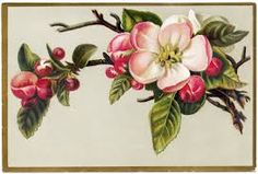 vintage fruit blossom - Google zoeken