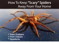 """How to Keep """"Scary"""" Spiders Away From Your Home"""