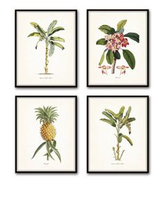 VINTAGE TROPICAL BOTANICAL PRINT SET NO.1 GICLEE CANVAS PRINT SET - 4 PRINTS  This set features a series of hand colored etchings from the 1770s