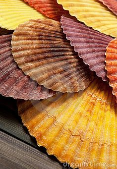 colorful pictures of seashells   Colorful Seashells. Royalty Free Stock Photography - Image: 19848537