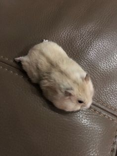 I dont know why he loves splooting so much – hamsters Robo Dwarf Hamsters, Hamsters As Pets, Funny Hamsters, Rodents, Super Cute Animals, Cute Funny Animals, Cute Baby Animals, Animals And Pets, Hamster Care