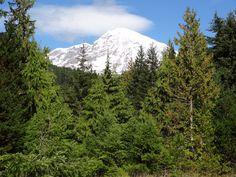 Mount Rainier at Paradise