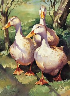"""Silver Appleyards"" Watercolour by Trevor Waugh ©"