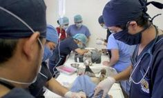 Avanza programa de esterilización canina y felina en el municipio capitalino